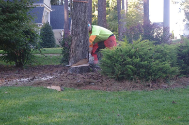 Tree Removal Cost in Knoxville TN
