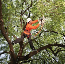 Tree Trimming Knoxville