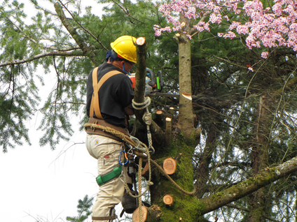 Tree Trimming vs Tree Removal Knoxville TN