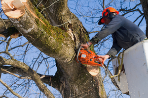 Tree Trimming Cost in Knoxville TN