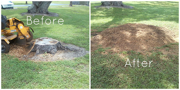 Before & After Stump Grinding Knoxville TN