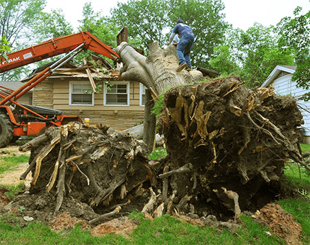 Stump Removal Knoxville TN